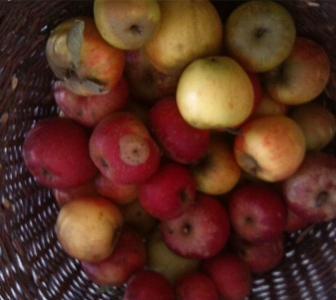 Rezept des Monats: Apfelschalentee